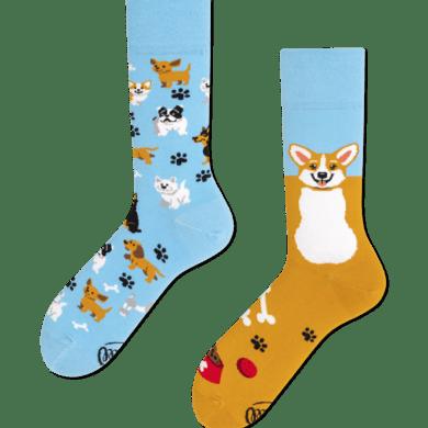 Playful Dog Socks by Many Mornings